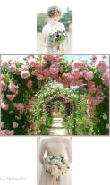 Bouquet de la marie Brabant Wallon : Fleuristes mariage & Bouquet de ...