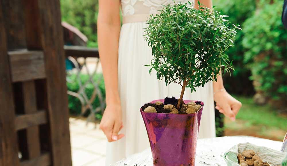 rituel arbre planté