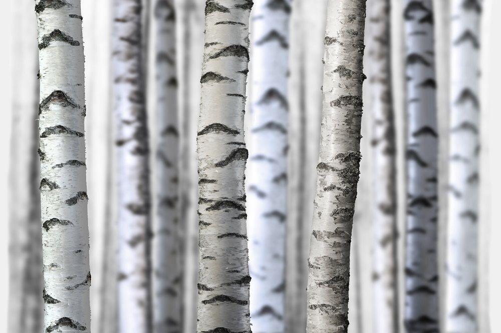 Mur de rondelles de bois et mousse végétale – DIY mariage